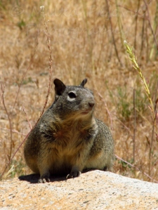 squirrel relaxing in the sun