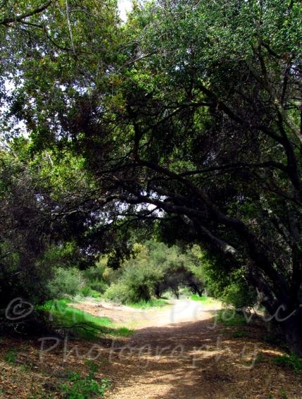 The Enchanted Forest - Dos Picos Park, Ramona, California