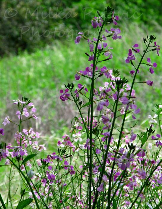 Spring blooms in San Diego, California