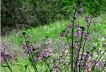 California wildflower blooms