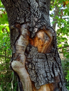 A word a week - face of woman in tree trunk