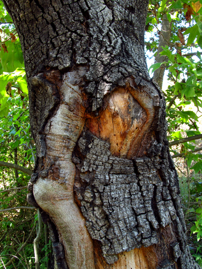 WordPress weekly photo challenge: Wrong – the hidden face in the tree