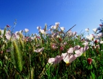 March: California wildflowers