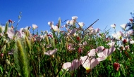 My 2013 calendar pick for March: Californiawildflowers