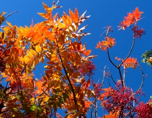 Travel theme: Multicolored sumac fall foliage