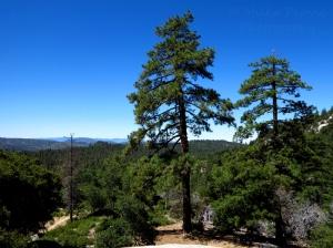 Wordpress weekly photo challenge: horizon at Idyllwild Park, California