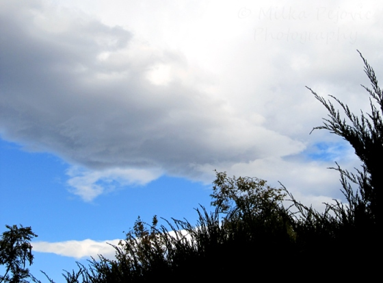 Let's be wild weekly photo challenge - weather - cloudy day in San Diego, California