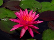 Did you like the original water lilies? There's more where it came from