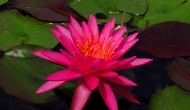 Did you like the original water lilies? There's more where it camefrom