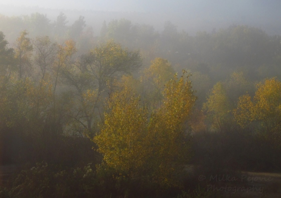 Wordpress weekly photo challenge: the golden hour - fall foliage glows through the fog
