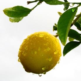 november_lemon_1
