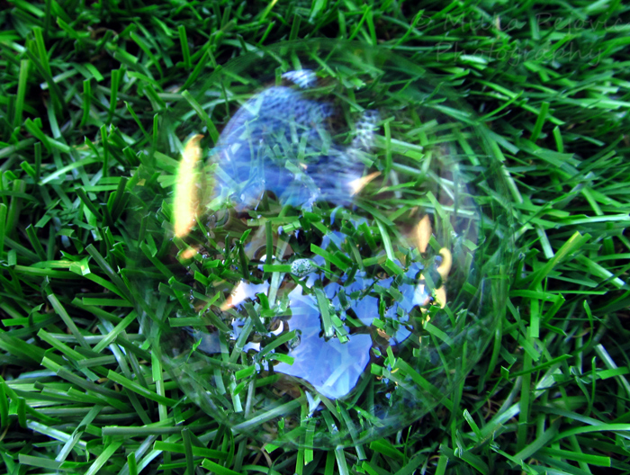 WordPress weekly photo challenge: grass blades inside a bubble