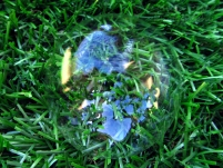 WordPress weekly photo challenge: the world reflecting inside a bubble
