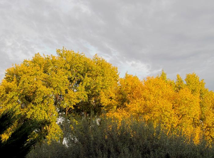 Wordpress weekly photo challenge: Renewal - after the rain