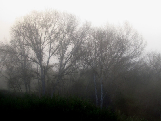 WordPress weekly photo challenge: Changing Seasons - foggy morning in San Diego