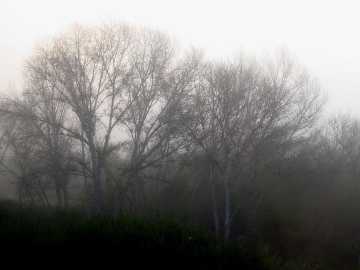 http://dailypost.wordpress.com/2013/11/01/photo-challenge - Eerie foggy morning in San Diego
