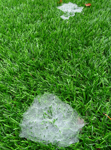 Sunday Post: Concept - raindrops in spider web on grass