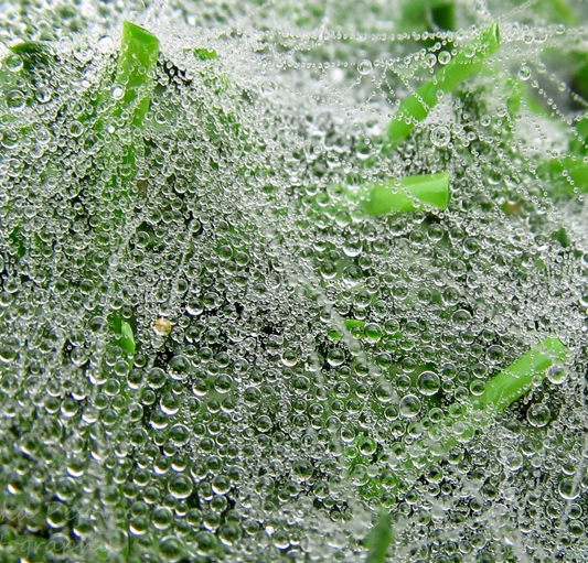 Sunday Post: Concept - close-up of raindrops on spider webs on green grass