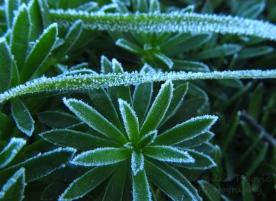 Cee's Fun Foto Challenge: Winter - texture of frost on grass