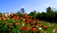 Bright and colorful wildflowers to warm you up on this cold December day
