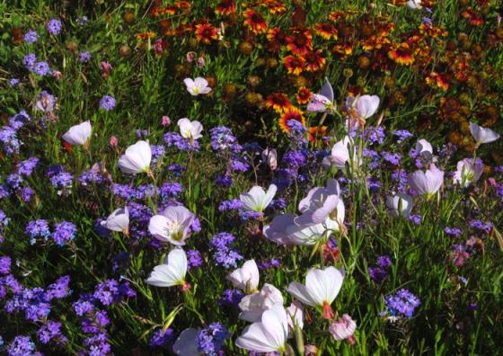 Purple and white wildflowers