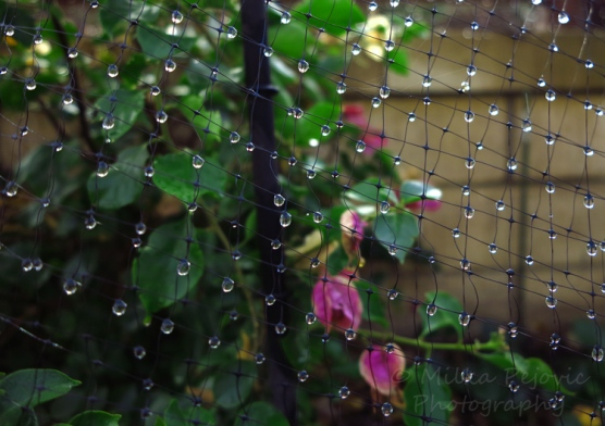 Close-up of raindrops on netting