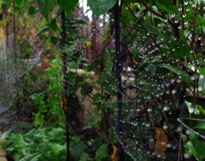 Raindrops on garden netting