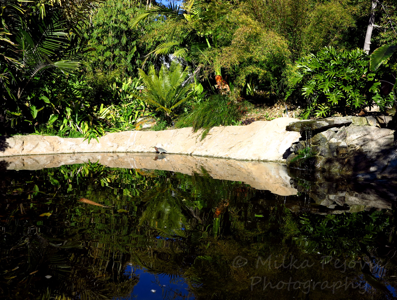 Sunday Post: Simplicity - Bamboo pond at the San Diego Botanic Garden
