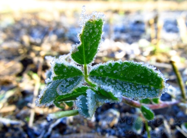 Travel theme: delicate frost on leaves
