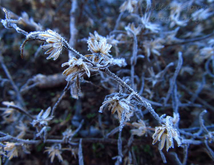 Delicate frost on plants and flowers
