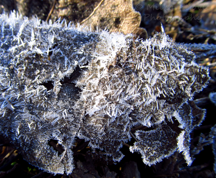 Frosty ice crystals on a leaf