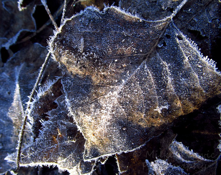 Frost on the edge of a leaf