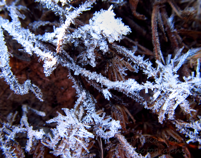 Frosty ice crystals on twigs