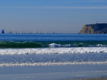 Sailboats out of the San Diego Bay