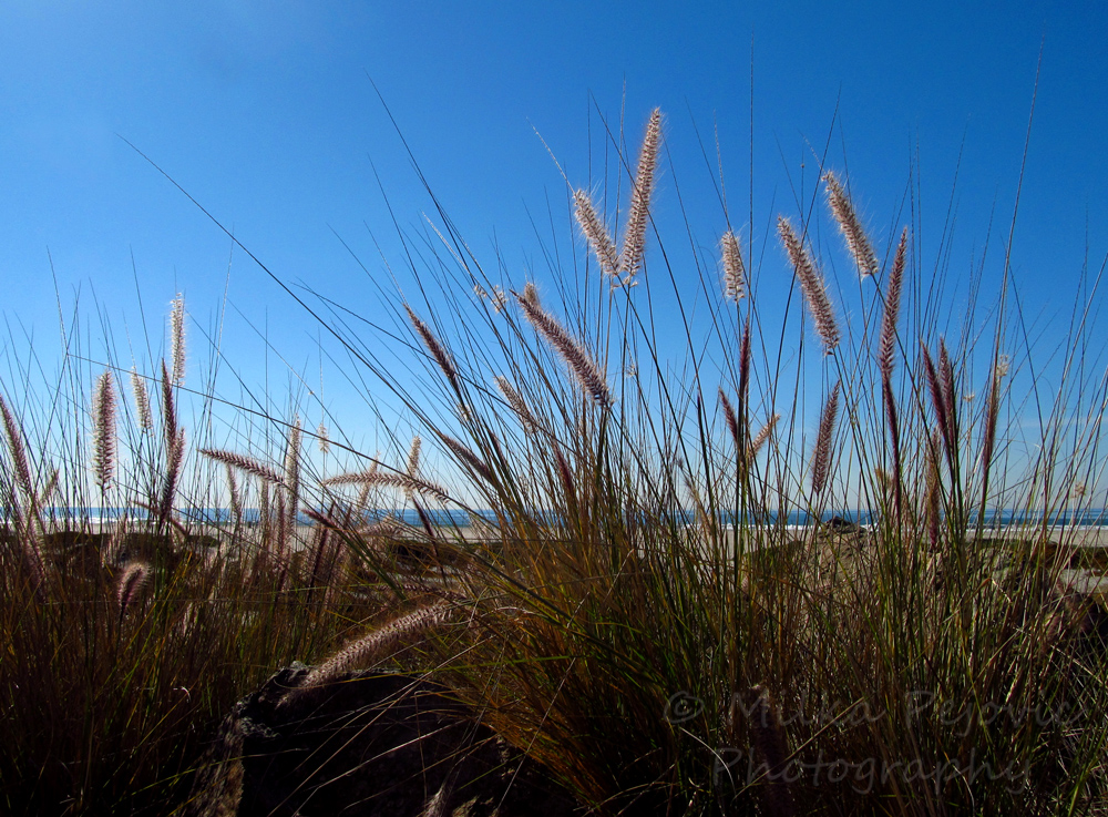 WordPress weekly photo challenge: In the background - Pacific ocean at Coronado beach