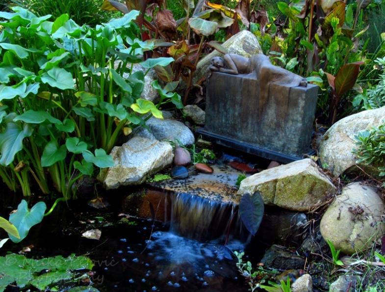 Sunday Post: Simplicity - lily pond at the San Diego Botanic Garden