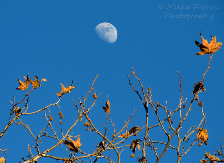 Travel theme: Blue sky in San Diego and rising moon