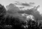 Cee's Fun Foto Challenge: Black and White or Sepia Tones - a cloudy sunrise
