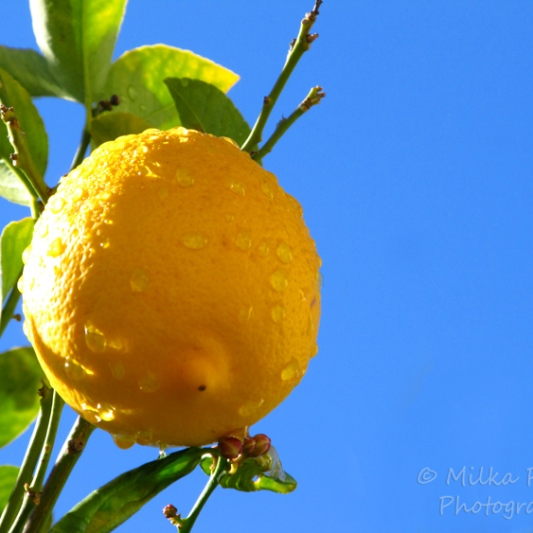 Wordpress weekly photo challenge: Saturated - yellow lemon against blue sky