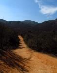 WordPress weekly photo challenge: Forward the hiking path