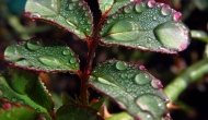 Macro Monday: Raindrops on leaves