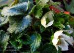 WordPress weekly photo challenge: Forward to strawberries