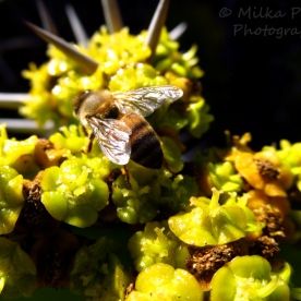 Travel theme: see through wings of a bee
