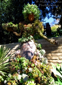 Wordpress weekly photo challenge: Home - amazing topiary at the San Diego Botanic Garden