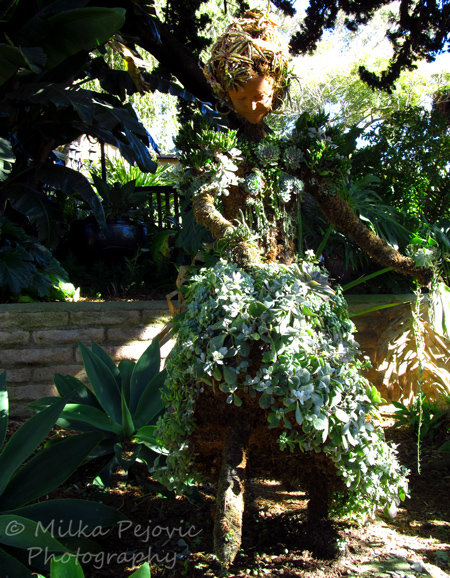 Mexican lady topiary at the San Diego Botanic Garden
