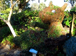Rhinoceros topiary
