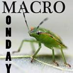 macro_monday