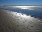 Cee's Fun Foto Challenge: Earth - San Diego sandy beach