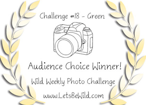 Let's be Wild Audience Award