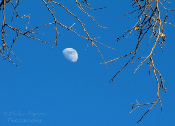Moon rising in the afternoon